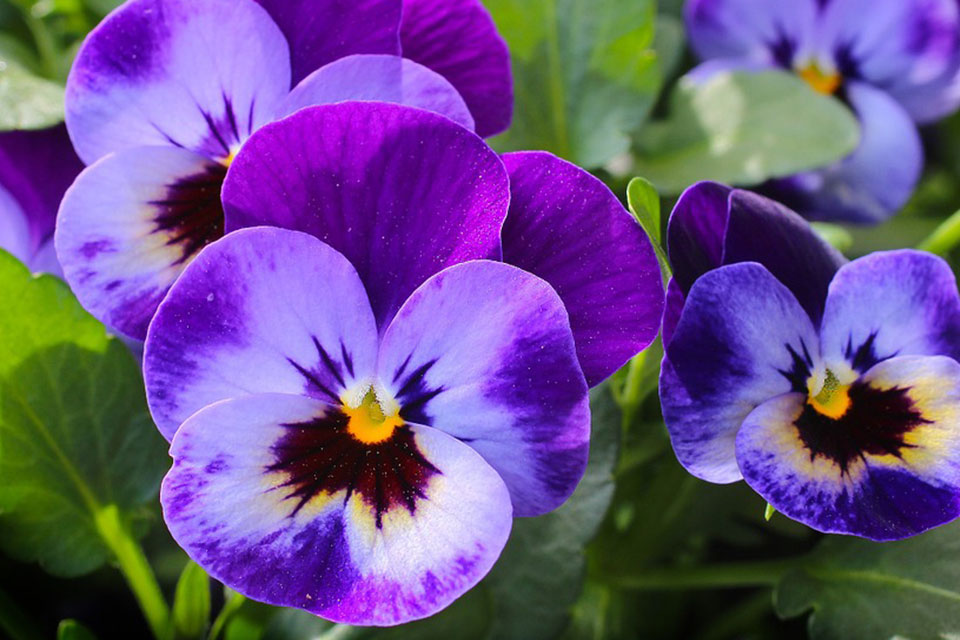 purple-05