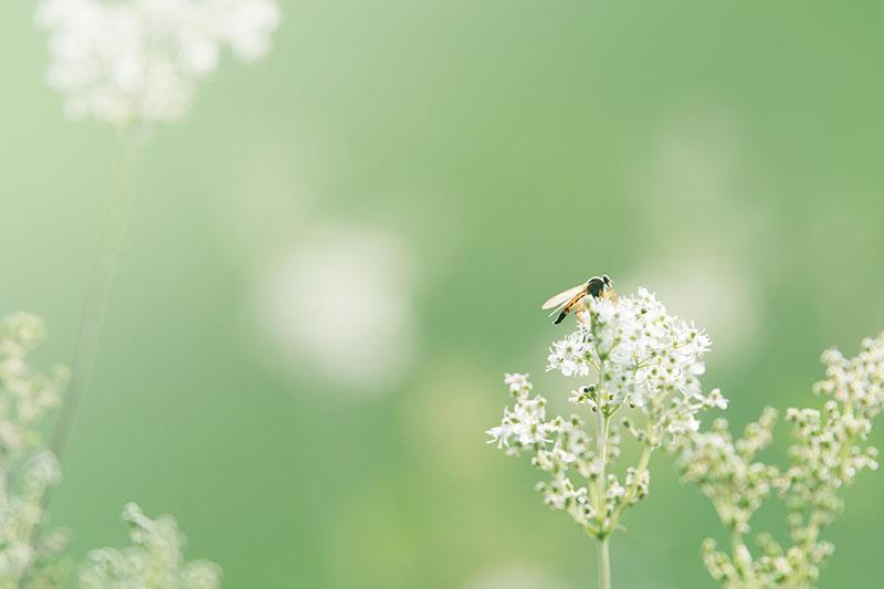 wild-flower-1561912_1920